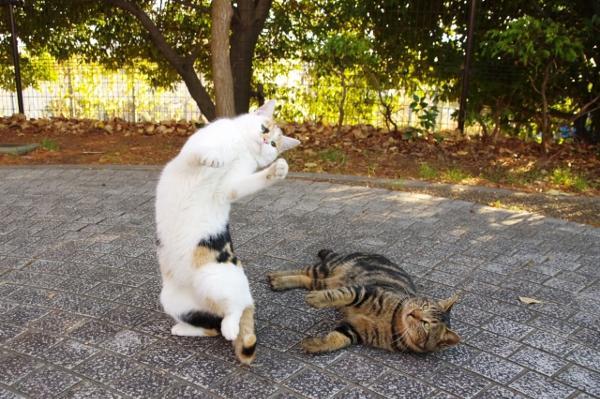 ストリート ダンシング キャット-道路で踊る猫