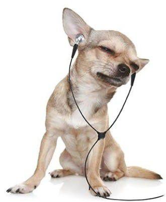 ヘッドフォン学習する犬