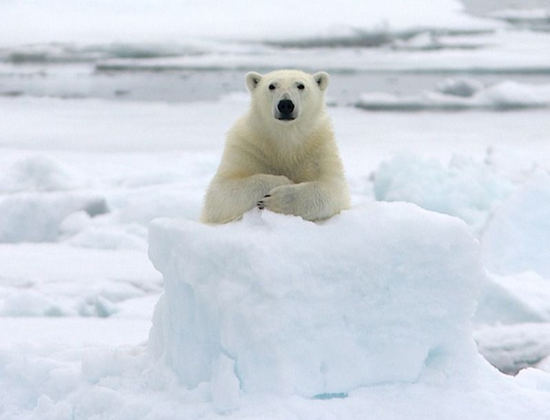 片鼻呼吸を ためしてみたい クマ