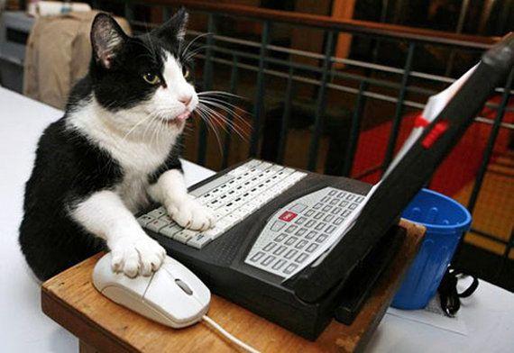 コンピューターウイルスを プログラムする 猫