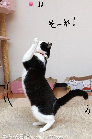 猫のバレーボール