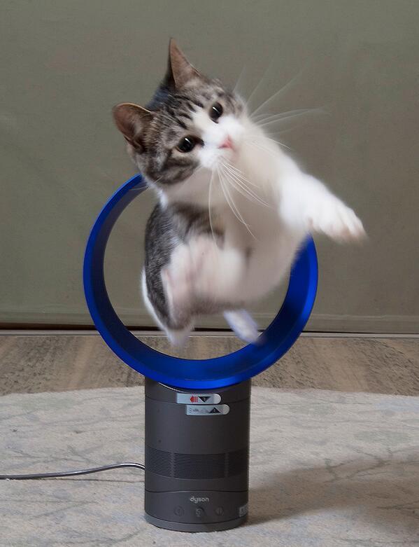 輪くぐり猫