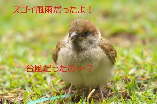 010_202007010140531af.jpg