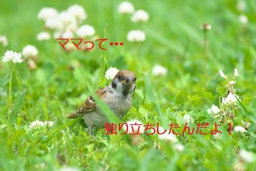 030_20200706143950e27.jpg