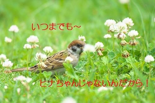 040_20200706143951aaa.jpg