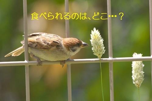 050_20200628210929f2d.jpg