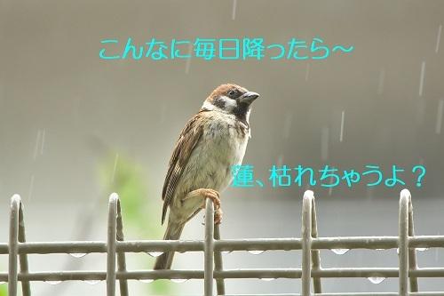 060_20200726215000c32.jpg