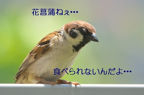 090_20200602212034d8c.jpg