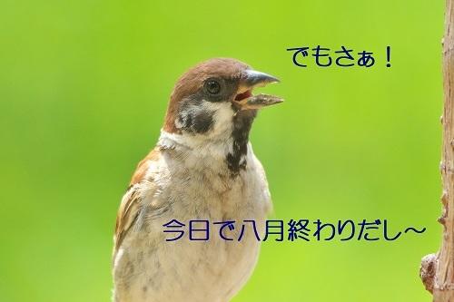 090_20200831131515385.jpg