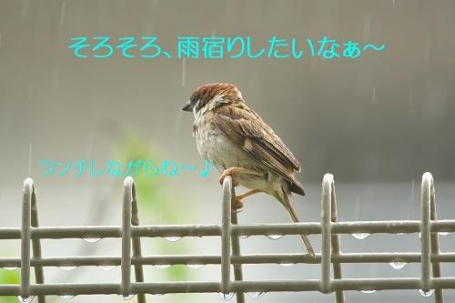 100_20200726215006acf.jpg
