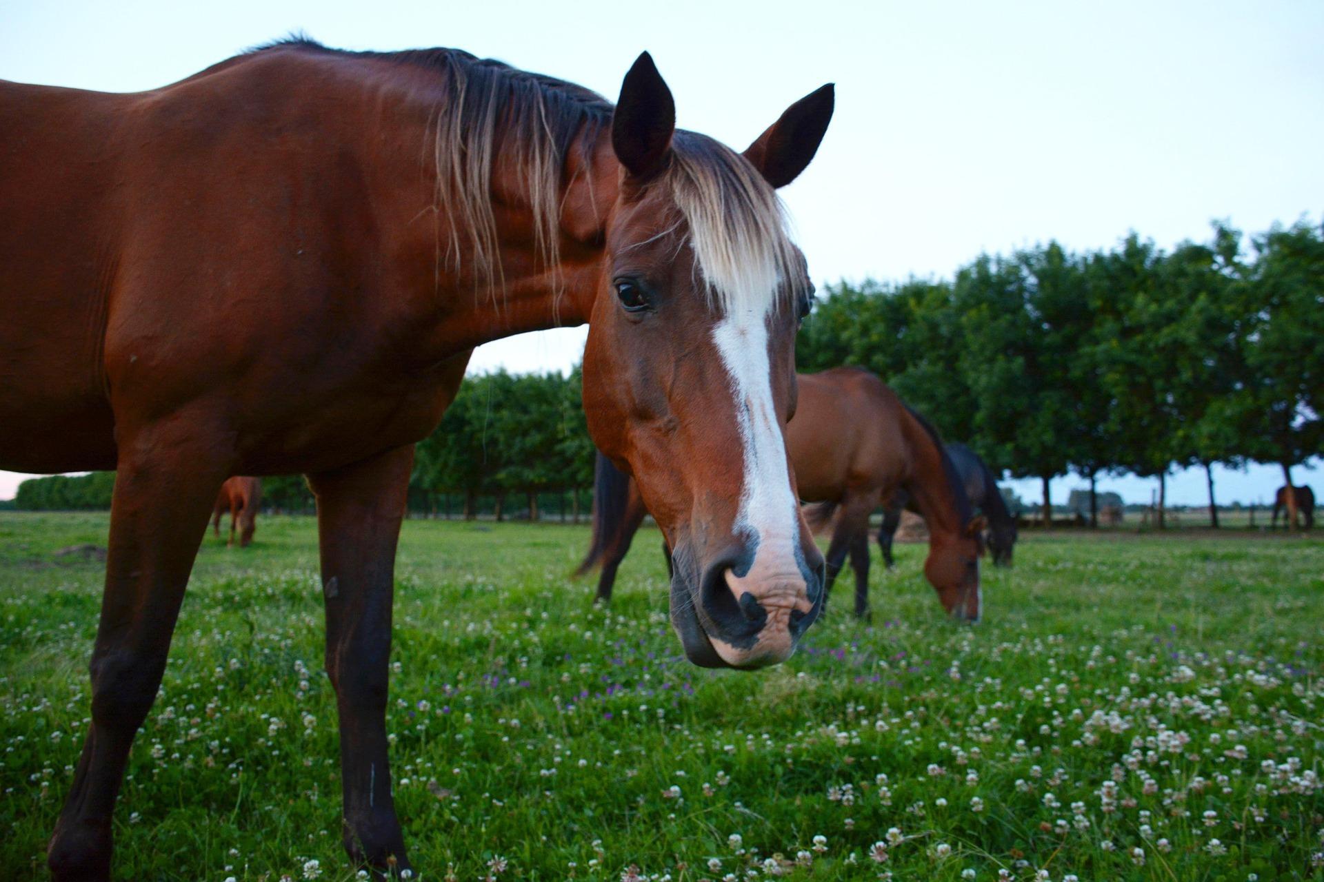 horse-2536539_1920.jpg