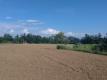 麦畑のあと