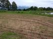 ため池の横の空き地の大豆