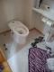 1階の新しいトイレ①