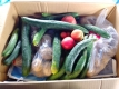 野菜の箱詰め
