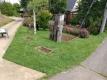 芝生花壇②