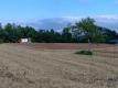 家の南側の麦刈