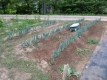 ネギの畝の草取り