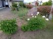 スイセンを植えた前庭