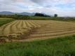稲刈りが終わった田