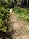 庭の草取りアフター