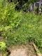 庭の草取りビフォー