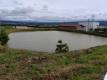カワセミを見た池