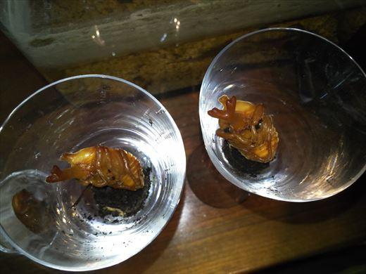 2020カブトムシの蛹 (9)