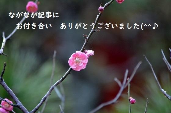 紅梅4845