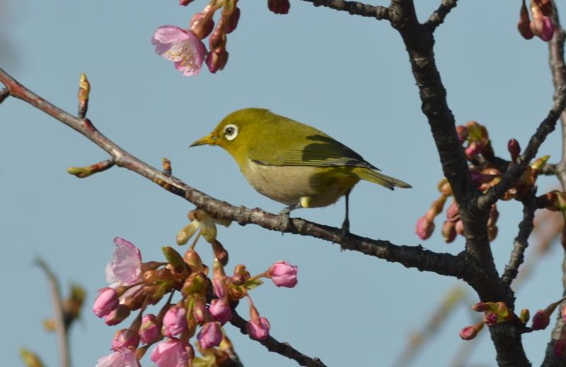 春よ春_5705