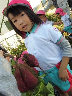 令和元年年少芋ほりP1020321
