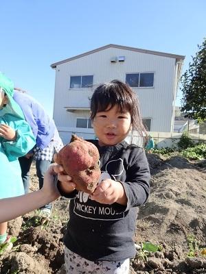 20191115あひる芋掘り2