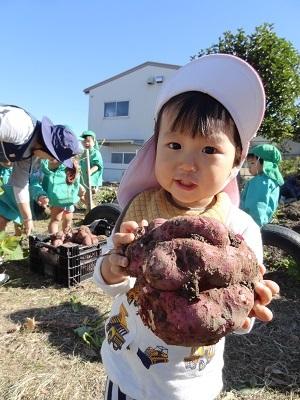 20191115ひよこ芋掘り2