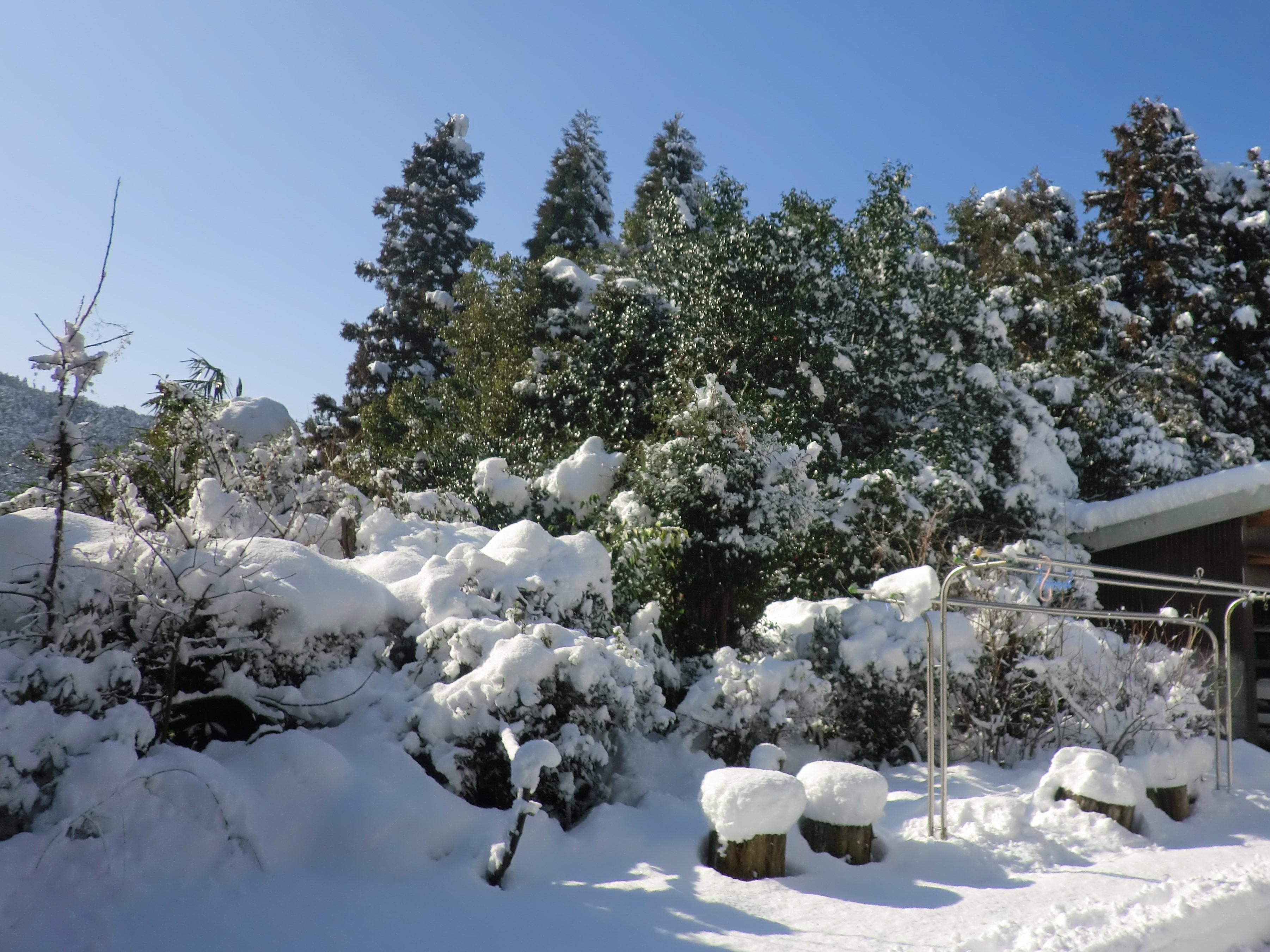 雪2013.1.18