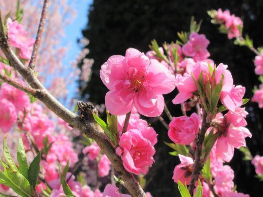 20_03_21-07tougenkyou.jpg