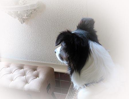 0608忠犬レオ