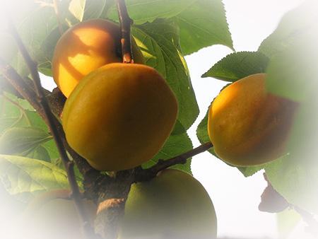 0611杏子1 のコピー
