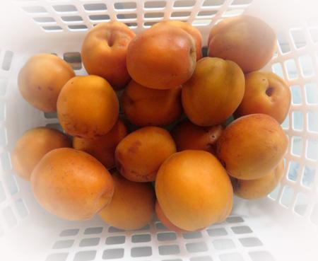 0614杏