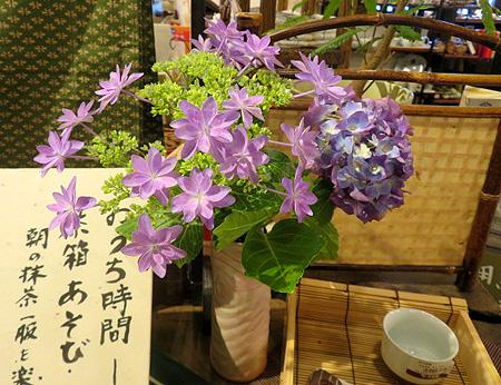 0615紫陽花
