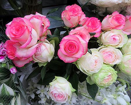 0622薔薇1