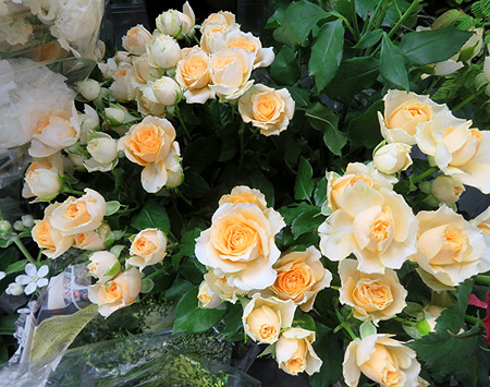 0622薔薇