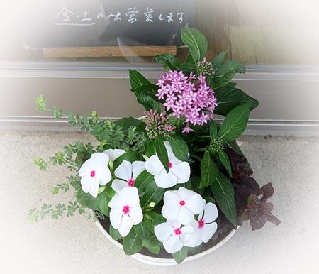 0703可愛い鉢植え