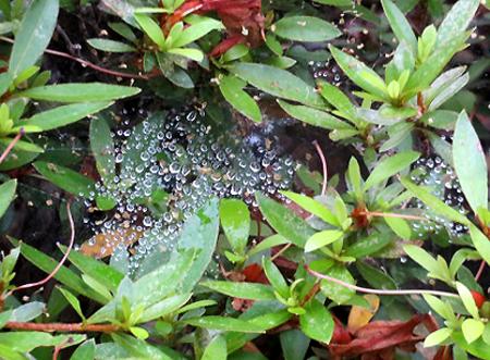 0709蜘蛛のお絵かき