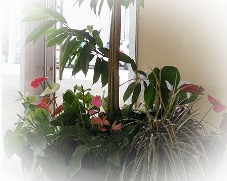 0823観葉植物