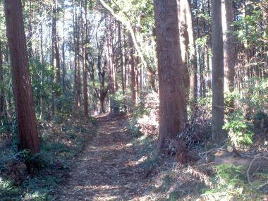 6_お小倉の森