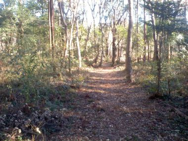 7_お小倉の森