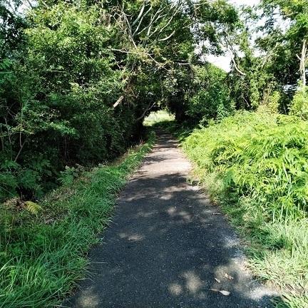 191002畑への道