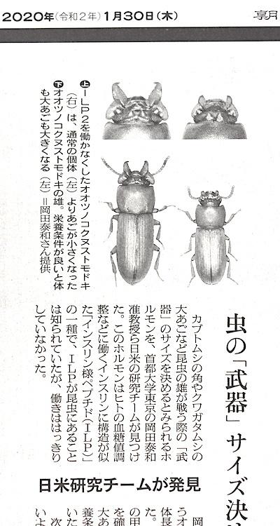 虫の武器サイズ