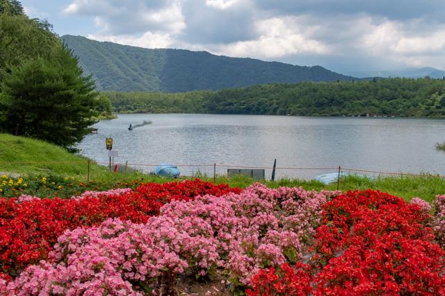 富士五湖(24)