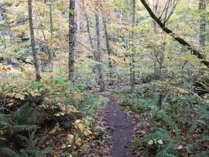 191024森の道